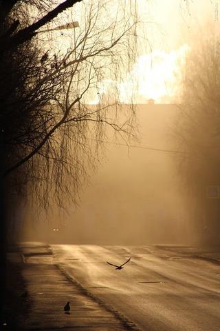 Думала утро туманное, оказалось трактор чистил улицу, пыль поднял Природа Ухты и Коми Ухта