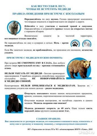медведь УХТА24, ПЕРВЫЙ СПРАВОЧНЫЙ ПОРТАЛ УХТЫ Ухта