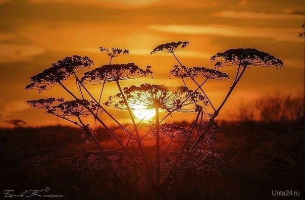 на закате Природа Ухты и Коми Ухта
