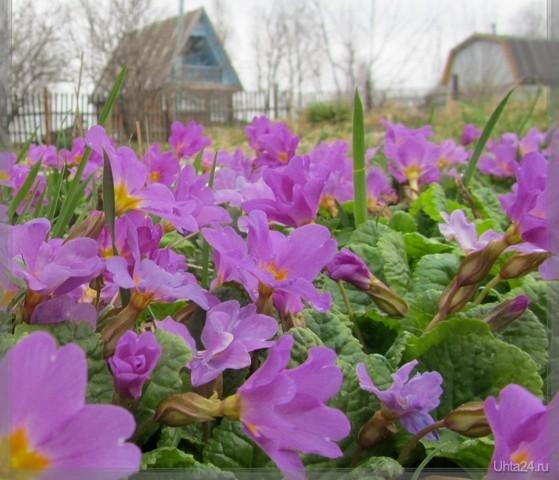 Начало лета Природа Ухты и Коми Ухта