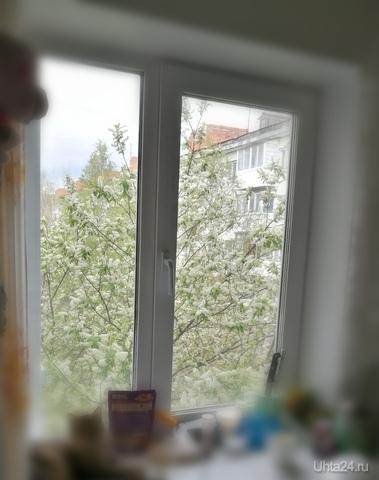 В этом году черемуха не радует, а пугает(снег напоминает, брррррр)  Ухта