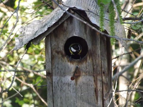 Много голодных в домике Природа Ухты и Коми Ухта