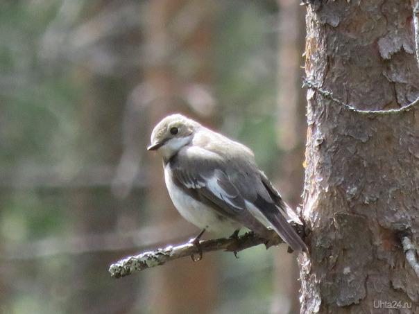 Маленькая птаха. Природа Ухты и Коми Ухта