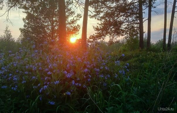 Июньский закат Природа Ухты и Коми Ухта