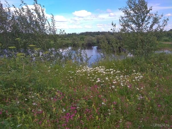 Июльский пейзаж Природа Ухты и Коми Ухта
