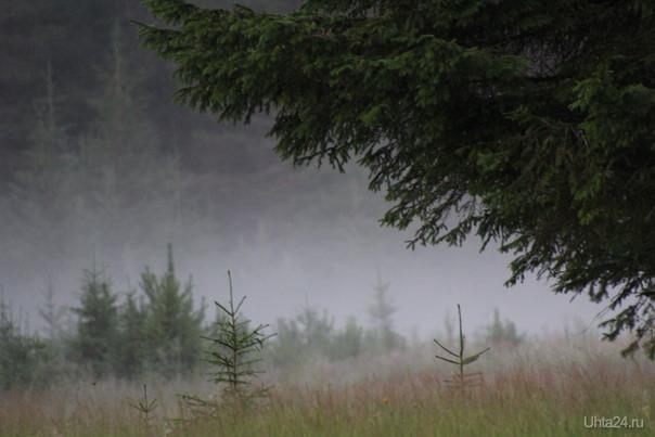Якша. Туманное утро. Мир глазами ухтинцев Ухта