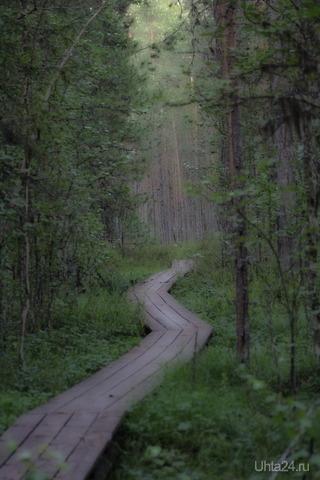 Якша. Заповедная тропа (та называется экскурсия по Печоро-Илычскому биосферному заповеднику). Мир глазами ухтинцев Ухта