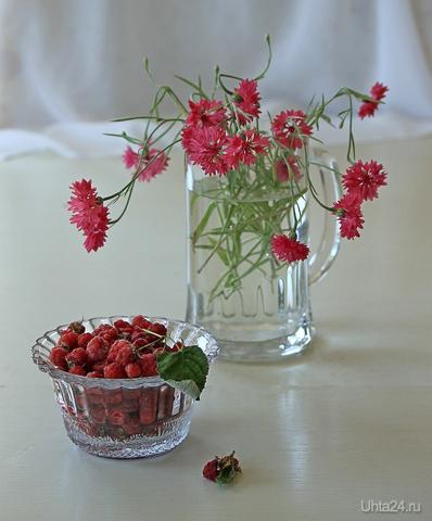 Натюрморт с малиной и красными васильками  Ухта