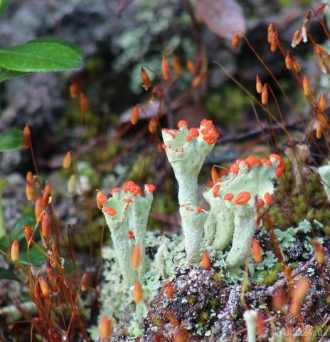 Печро-Илычский биосферный заповедник Мир глазами ухтинцев Ухта