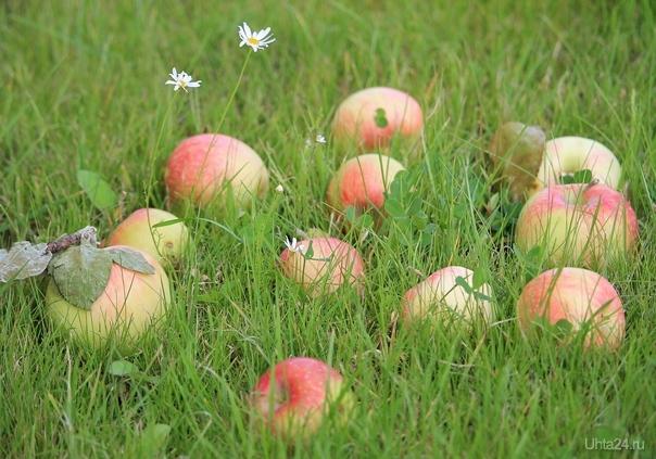 Сегодня Яблочный Спас.  Ухта