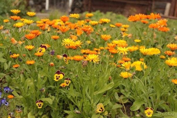 цветы севера Природа Ухты и Коми Ухта