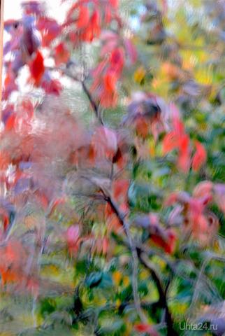 Вот и осень пришла... Природа Ухты и Коми Ухта