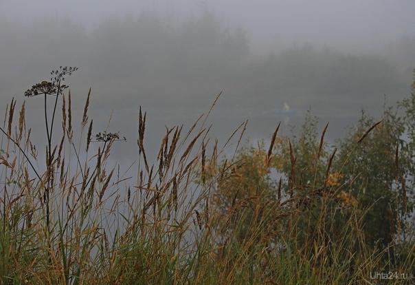 Густой туман Природа Ухты и Коми Ухта