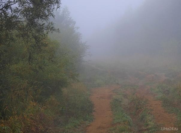 Осенний туман Природа Ухты и Коми Ухта