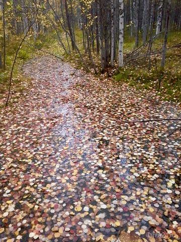 Ручей из листьев . Осень 2018  Ухта