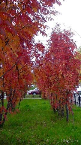 Осенние краски, осенние дни... Вновь гроздья рябины горят как огни. Природа Ухты и Коми Ухта