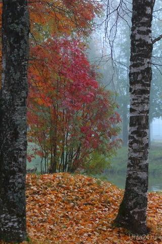 Осенний утренний туман Природа Ухты и Коми Ухта