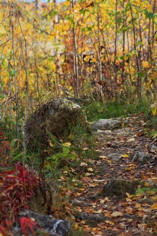 Осенняя тропинка Природа Ухты и Коми Ухта