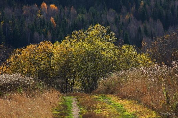 Всё меньше и меньше листочков Природа Ухты и Коми Ухта