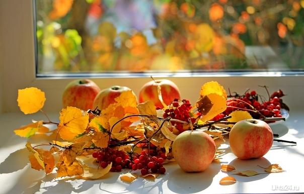 Осенний натюрморт на подоконнике Разное Ухта