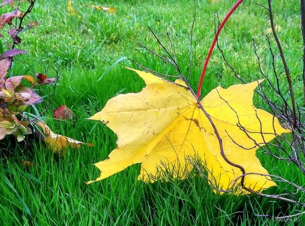 Осенний лист  Ухта