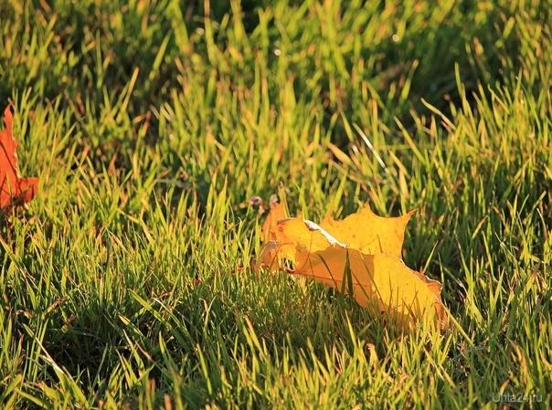Осенний лист на траве Разное Ухта
