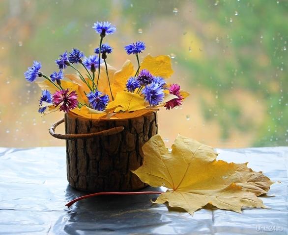 Натюрморт с осенними листьями и васильками  Ухта