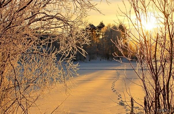 Солнечный день на берегу озера близ Сыктывкара.  Ухта