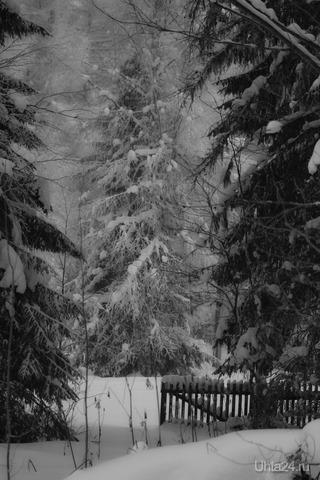 Снежный лес Природа Ухты и Коми Ухта