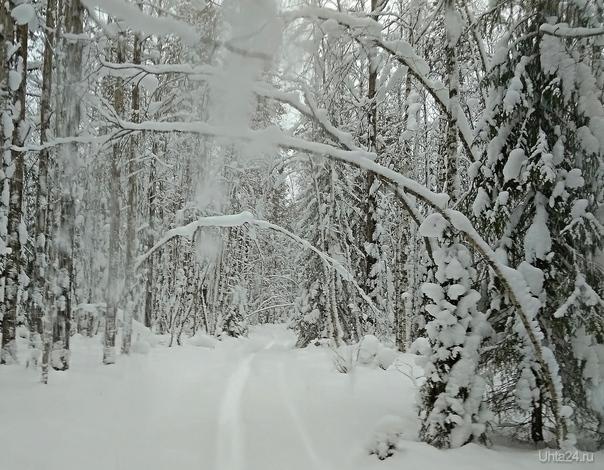 В январском лесу Природа Ухты и Коми Ухта