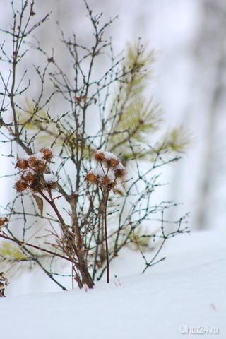 Зимний, лесной букетик Природа Ухты и Коми Ухта