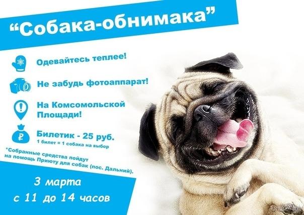 Собака-обнимака Мероприятия Ухта