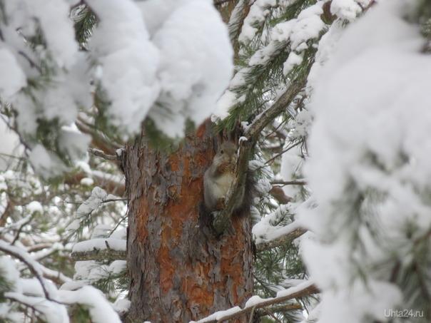 Белки в лесу пока большая редкость. Увидела одну,она жевала кору,  сидя на ветке.  Ухта