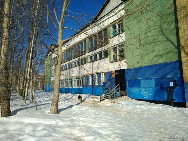 Ухта 29 03 2019 бродячие собаки осеменяют паразитами территорию школы номер 5 Пионергора Ухта Коми РФ  Ухта