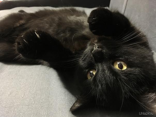 Черный кот.  Питомцы Ухта