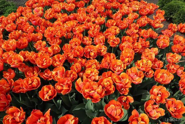 День победы. Цветы на аллее славы.  Ухта
