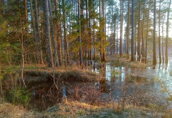 Весенний паводок Природа Ухты и Коми Ухта