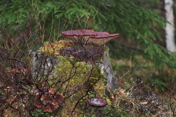 Лесной макромир Природа Ухты и Коми Ухта