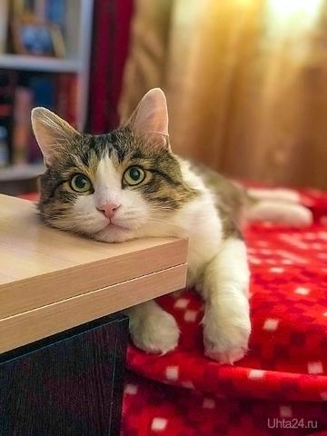 Кот задумался  Ухта