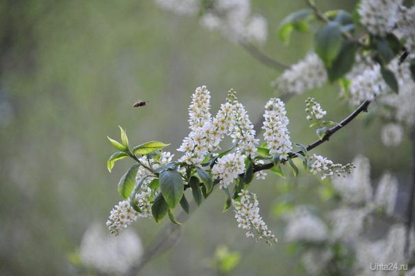Не пчела.  Природа Ухты и Коми Ухта