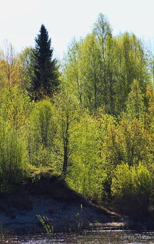 По дороге на Шудаяг (вдоль реки) Природа Ухты и Коми Ухта