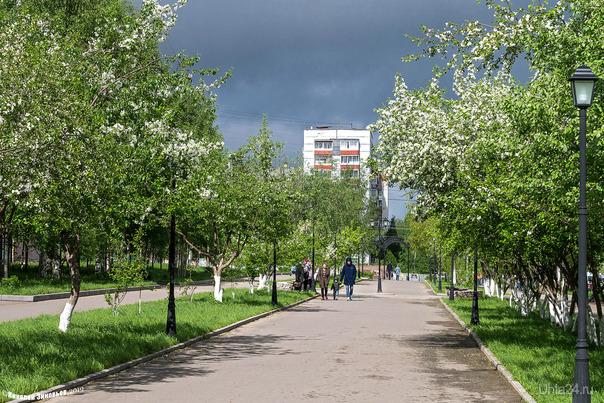 Яблони в цвету... Улицы города Ухта
