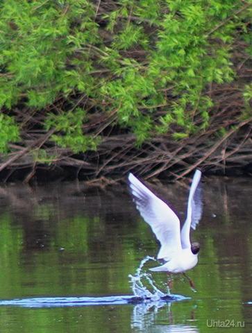 танцы на воде Природа Ухты и Коми Ухта