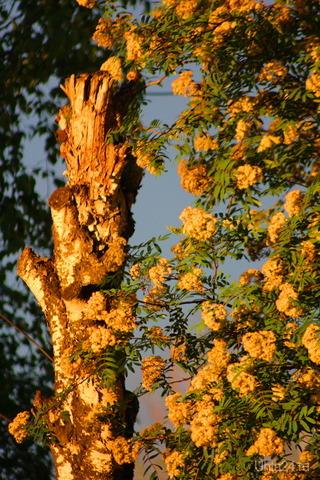 солнышко в 2 ночи 22.06.19 Природа Ухты и Коми Ухта