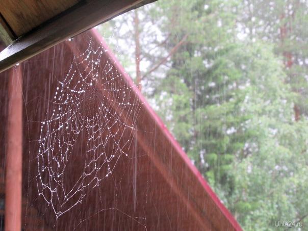 Дождинки на паутинке. Природа Ухты и Коми Ухта