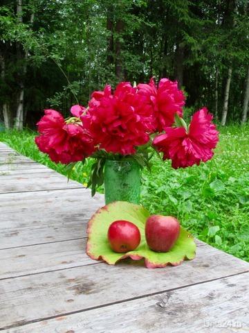 Натюрморт с яблоками. Природа Ухты и Коми Ухта