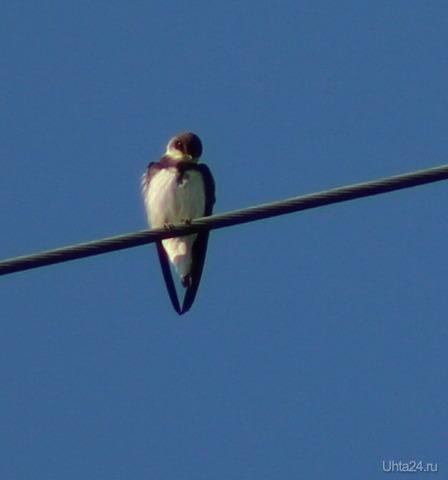 Птенец ласточки-береговушки Природа Ухты и Коми Ухта