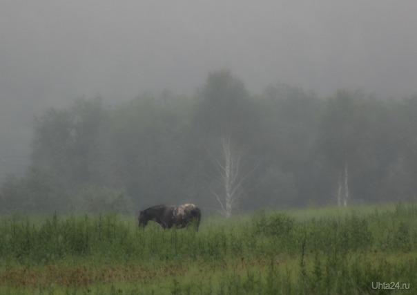 Туманным утром Природа Ухты и Коми Ухта