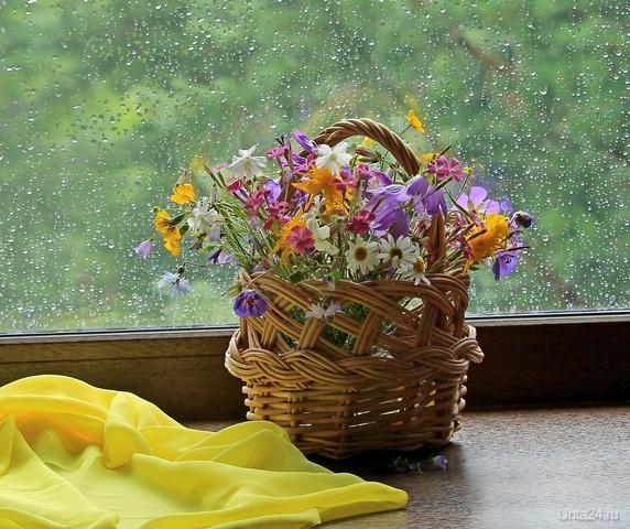 Полевые цветы  Ухта
