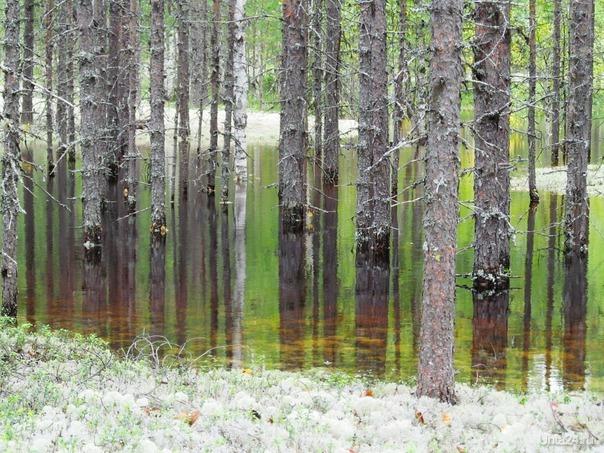 в этом сезоне и грибочки потопли на бору Природа Ухты и Коми Ухта